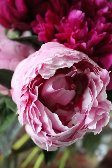 Peonie Close Up Premiere