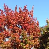 Autumn Glow!
