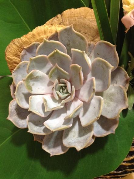 Flower, succulent, Succulent, #succulent #succulents, #flowers, Maylana's Chronicles, Maylana's Closet, Bouquet, #bouquet, Floral, #floral, Florals, #florals